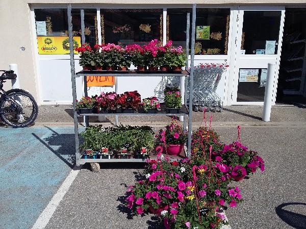 Mise en place des fleurs pour le printemps .